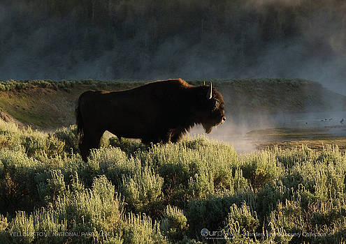 Yellowstone National Park, USA  by OurPlace World Heritage