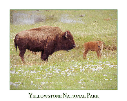 Jayne Wilson - Yellowstone Poster with Bison