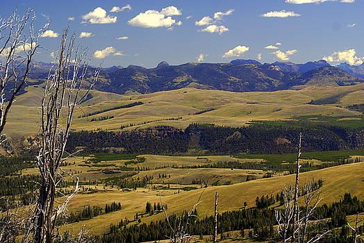 Marty Koch - Yellowstone Vista 2