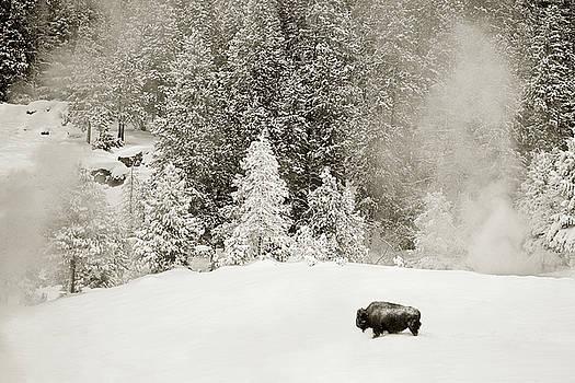 Yellowstone Winter Wonderland by Scott Wheeler
