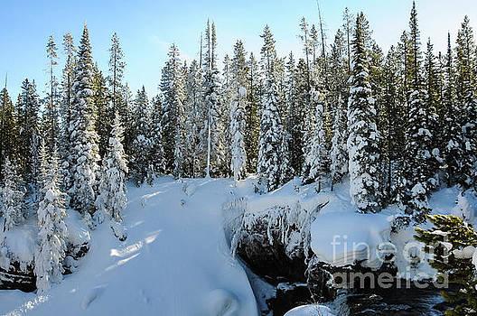 Bob Phillips - Yellowstone Winterscape Five