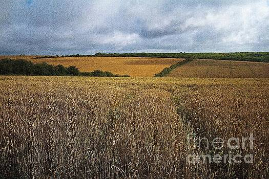 Yelow fields and fluffy clouds  by Gary Bridger