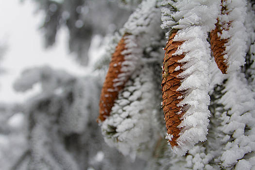 Yep, it's Winter by Andreas Levi
