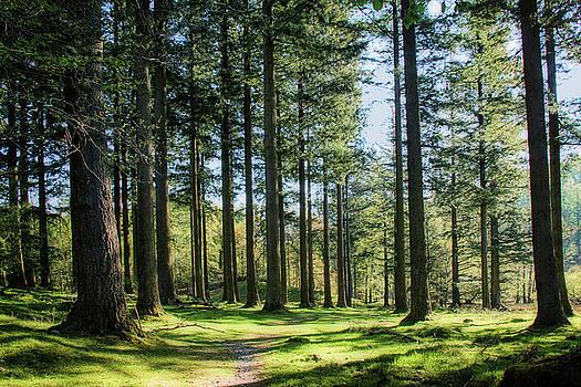 Yew Tree Tarn Woods by Susan Tinsley