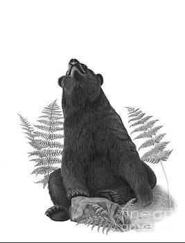 Yoga Bear by Susan Fraser SCA  B Sc