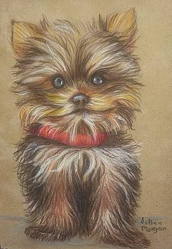 Yorkie  by JoAnn Morgan Smith