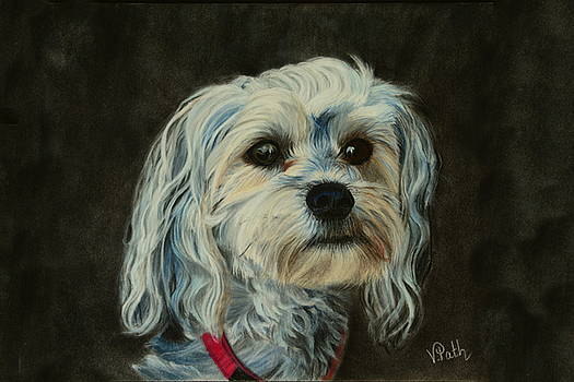 Yorkie Maltese Puppy by Vicky Path