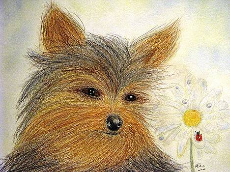 Yorkie Summer Fun by Angela Davies