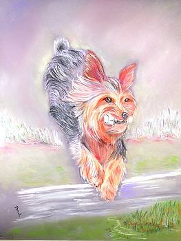 Yorkie The Thrill of the Jump by Janice Abel