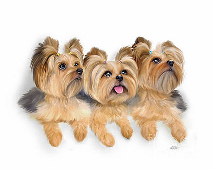 Yorkie trio by Catia Lee