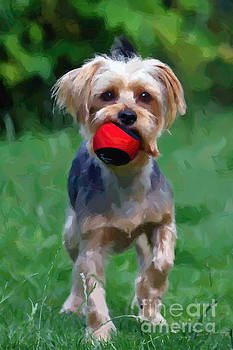 Yorkie with ball by Andrew Michael