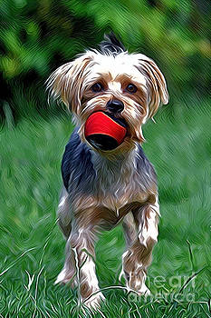 Yorkshire Terrier by Andrew Michael