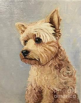 Yorkshire Terrier by Boni Arendt