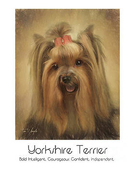 Yorkshire Terrier Poster by Tim Wemple