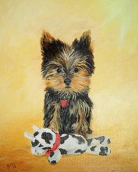 Yorkshire Terrier Puppy by Steve James