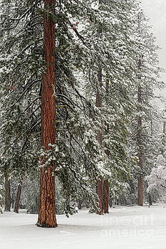 Yosemite Guardians in Snow Storm by Tibor Vari