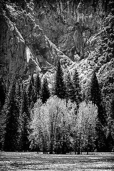 Yosemite Meadow in Black and White by Jan Hagan