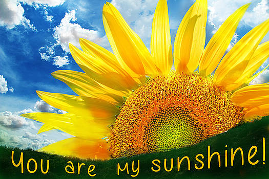 You are my sunshine by Angela Boyko