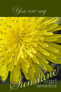 You are my Sunshine by Robin Clifton