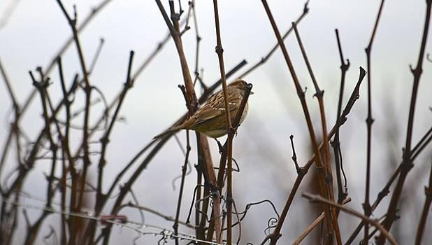 Young Bird in Foggy Vineyard by Alex King