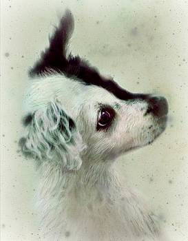 Young Border Collie portrait by Monica Magallon
