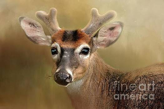 Young Buck by Geraldine DeBoer
