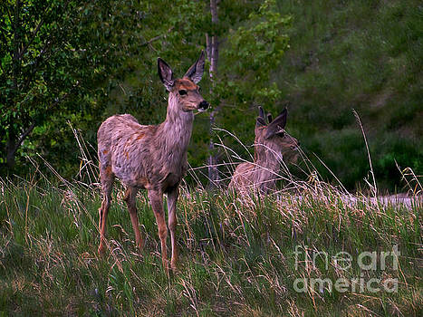 Young Deer In The Spring by Al Bourassa