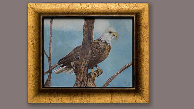 Young Eagle by Kathy Knopp