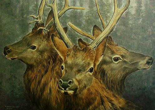 Young Elk Trio- Wapiti by Elaine Booth-Kallweit