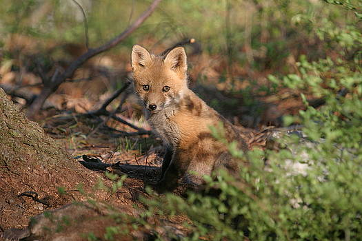 Young fox by Paul McCarthy