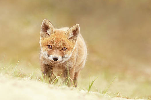 Young Fox Series -  Resistance is Futile by Roeselien Raimond