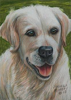Young Golden Retriever by Angela Finney