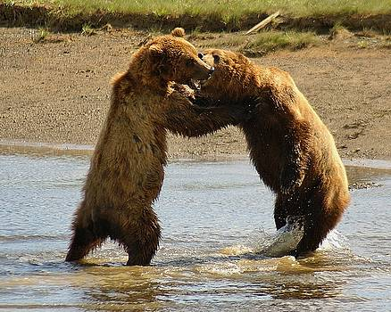Patricia Twardzik - Young Grizzly Bears Fighting