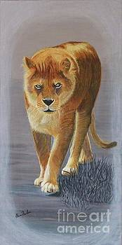 Young Male Lion by Alicia Fowler