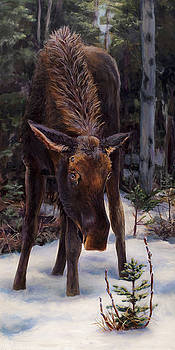 Young Moose and Pussy Willows Springtime in Alaska Wildlife Painting by Karen Whitworth