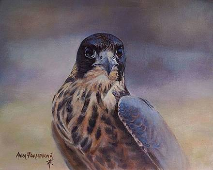 Young peregrine falcon by Anna Franceova