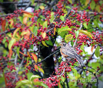 Young Robin in the Berries by Kerri Farley