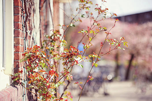 Jenny Rainbow - Young Rose Branches in Spring. Amsterdam