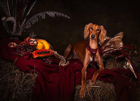 Young Saluki dog with fruits by Tanya Kozlovsky