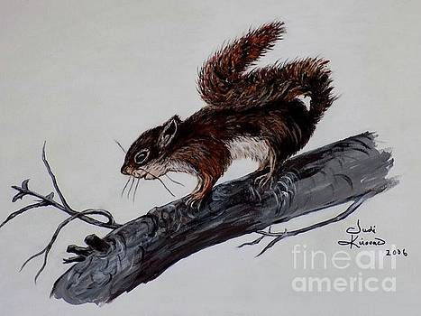 Young Squirrel by Judy Kirouac