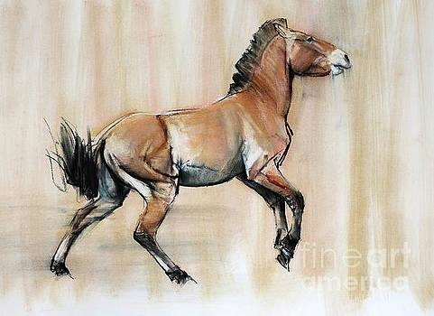 Young Stallion by Mark Adlington