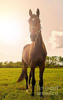 Sophie McAulay - Young stallion posing