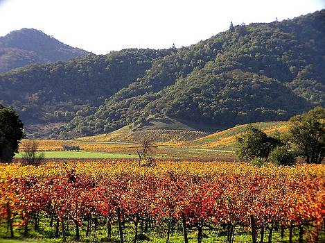 Yountville Colors by Heather Bethke