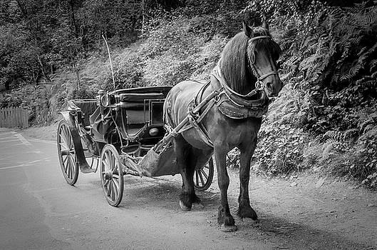 Tony Crehan - Your Carriage Awaits You