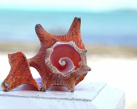 Your Inner Conch by Brandy Herren