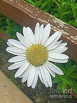You're A Daisy If You Do by Angela Weis