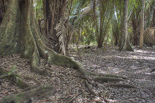 Yucatan Jungle by Steven Dramstad