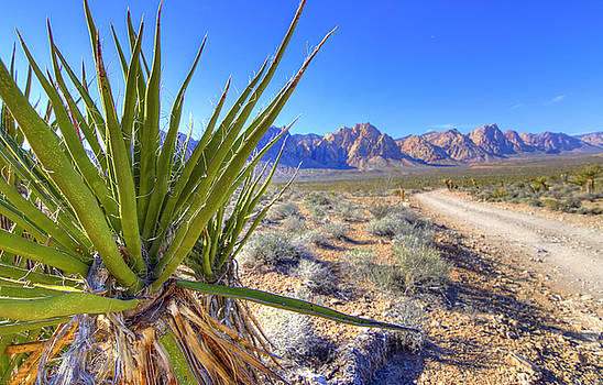 Yucca and Road by Scott Harris