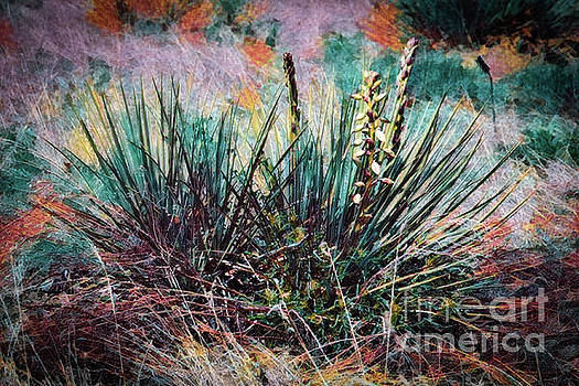 Yucca Gone Wild by Jon Burch Photography