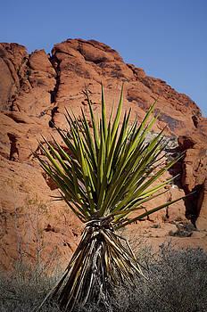 Kelley King - Yucca